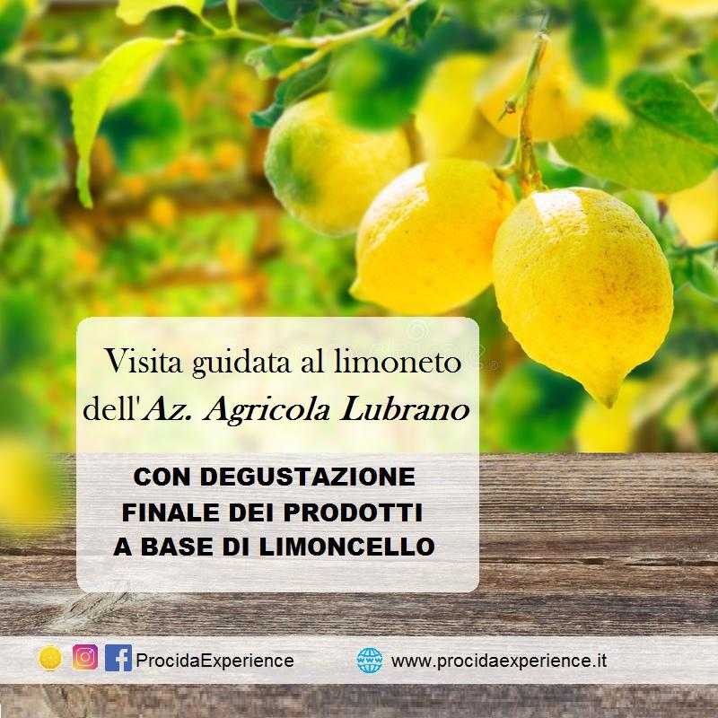 Lemon Experience a Procida